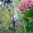 こがねグモの失敗の巻