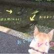 8月16日胡太郎さんのお散歩♪