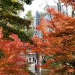 漱石山房から穴八幡散歩