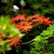 九品寺の彼岸花はまだコスモスがチラホラ 9月14日