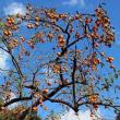 「幹周りが13.3m、高さは29mの樟」に会う【JR九州植木駅 鉄卓のフォト・ウォーク2017-16】
