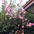 わが家の賑わいの花。