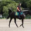 プリモシーンは戸崎騎手でデビュー!