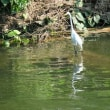 白鷺鷥(はくろし)