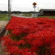 北条鉄道・東横田町の踏切附近の彼岸花が見頃 2018.09.24