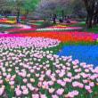 昭和記念公園のチューリップ 3
