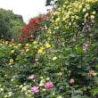 徘徊の爺、薔薇の園で香浴に酔う