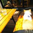 ワンコOKのカフェでランチです