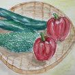 水彩画 夏野菜