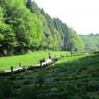 昭和の森 2