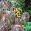 『初冬の寺社』 地福寺
