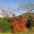もう冬だけれど、秋を感じに出かけた