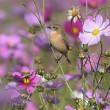 鳥撮りしばらくお休み