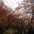 赤城山 / 前橋市 - 小沼周辺の紅葉