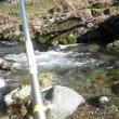 3月17日 那比川でアマゴ釣り!