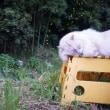 ホタル (猫はぼやけてます)
