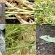 野菜と虫の物語