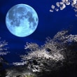 「月夜の桜」
