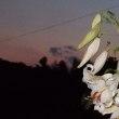 ヤマユリが咲くと夏!