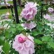 渡辺翁記念会館と薔薇