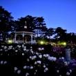 夜明け前のばら園