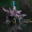 「川面の煌めき」 「カワセミ・・・紅葉が流れ付き・・・」