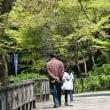 Ж 青空&新緑&メジロの姿、ドキドキ眺め Ж B公園(岐阜県岐阜市)