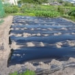 イチゴの畝作り