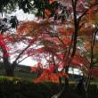 毛利庭園の紅葉