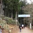 尾ノ内百景氷柱 (小鹿野町・尾ノ内渓谷)