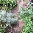 今日の お庭の ポイント