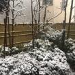 珍しく雪が降っています‼︎
