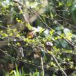 2018年4月1日『さいたま緑の森博物館』に春が来たぁ!