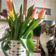 チューリップと一緒に写真に収まった猫、翌日に亡くなり悲劇の1枚に(英)