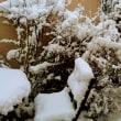 いつしかの雪