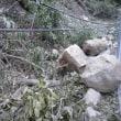 タマゴタケと倒木停電の現場