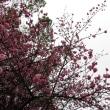 梅の花の季節~梅が入った俳句①~