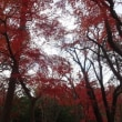 多摩散歩:はるひ野、防人見返り峠、ニュータウン、旧聖蹟記念館