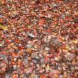赤城山 / 前橋市 - 大沼湖畔の紅葉