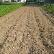 夕方涼しくなって、小豆と枝豆の種をまく畑を耕耘