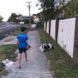 犬の散歩。