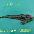 笑転爺の釣行記 3月10日☁ 久里浜・浦賀