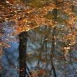 11月18日 晩秋の水面