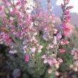 寂しい庭の草花たち
