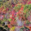 11月4日  秋景色
