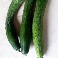 地場物野菜