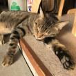半野良猫「ちゃっぴー3号」の近況 vol.18