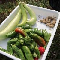 今年最後の夏野菜