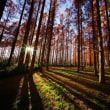 超広角10ミリレンズで撮ったメタセコイアの森 その1(水元公園)