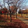 晩秋、朝の公園